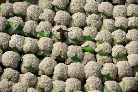 balles coton