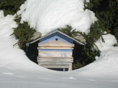 hibernation ruche