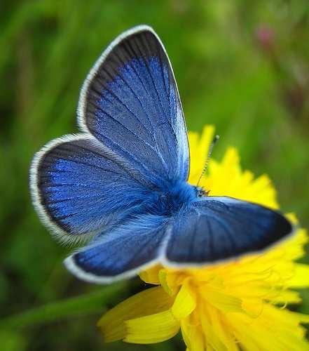 papillons-exotiques-photospapillon_13jan11-adobe-reader-img