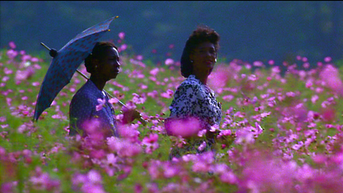 colorpurple-field