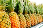 z10913183Q,Ananas