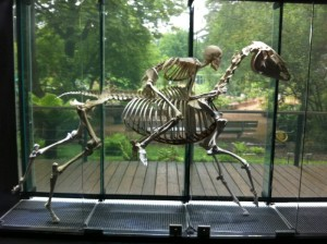squelettes-en-tout-genre-au-museum-dhistoire-naturelle--700-93674