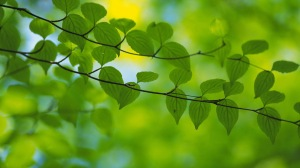 pleasant-greenery-wallpaper
