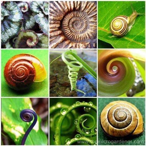 spirales nature.jpg